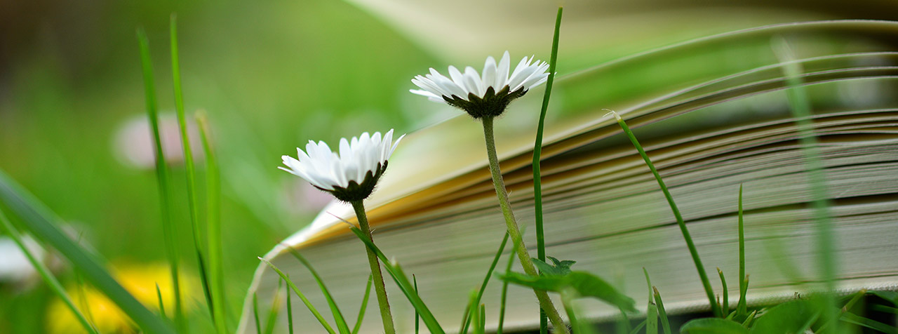 A book on cataloguing is in a field of growing grass and flowers